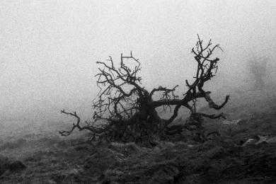 A foggy day on Ysgyryd Fawr, Wales. Contax RTS II, Carl Zeiss 50mm f1.4, Kodak Tri-X in HC-110. Stand Development.