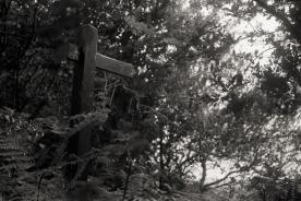 M2 Leica 2015113