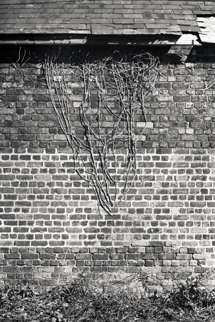 Cut off at the root. A wall in Sudbrook. Fuji ACROS 100 in Adox FX-39.