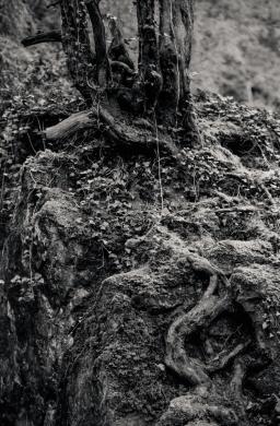 Silverfast Leica M2 051 1