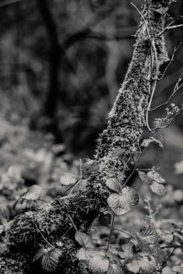 Silverfast Leica M2 051 2