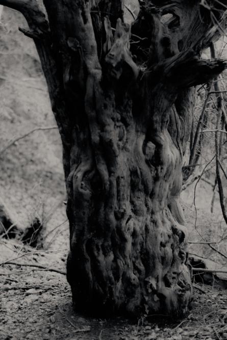Silverfast Leica M2 051_